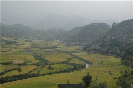 Arrozales/ Rice fields