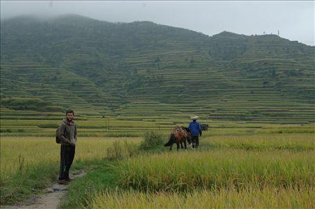 Arrozales / Rice fields
