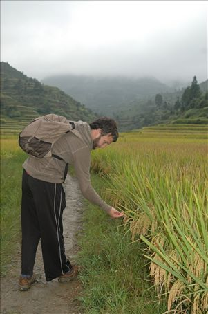 Ber y los arrozales / Ber and the rice fields