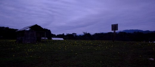 Dusk in the community filled with fireflies