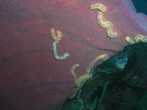 Worms on a Sponge JOE