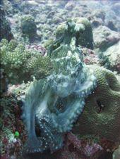 Octopus JOE: by gborchers3, Views[221]