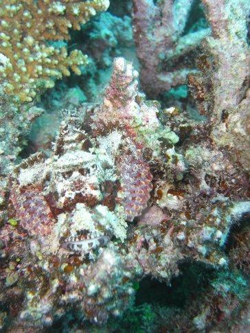 Stone Fish JOE