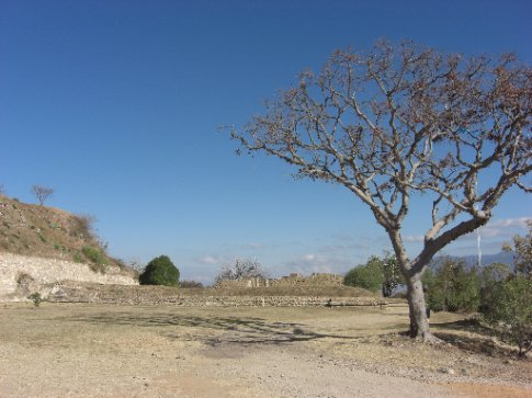 Peaceful Monte Alban