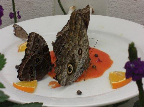 Butterflies in Chapultepec Zoo