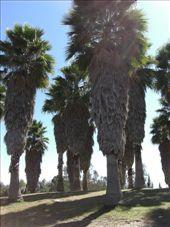 Rodolfo Landeros Gallegos park: by gemma, Views[260]