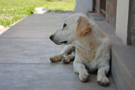 This resting dog represents the calmness one can find in Azpitia.