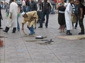 Snake charmers in Djemaa el-Fna square, Marrakesh: by george_grigoriou, Views[162]