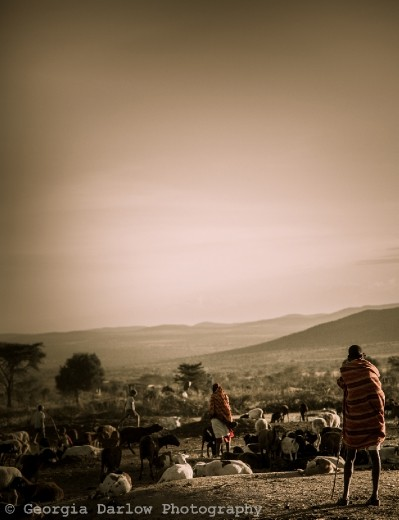 A Maasai herdsman overlooking his herd at dusk in the Maasai Mara, Kenya