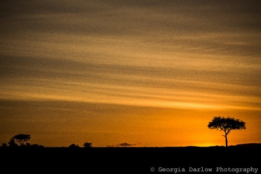 A sunrise skyline over the Maasai Mara, Kenya.