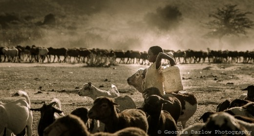 A girl helps bring in water and a herd of goats to her villag'es compound in the Maasai Mara, Kenya
