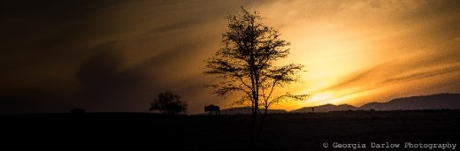 A silhouetted wildebeest passes in front of a rising sun in the Maasai Mara, Kenya
