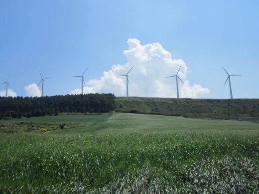 Wheat fields and white windmills