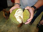 my first durian: by glimmerwing, Views[168]