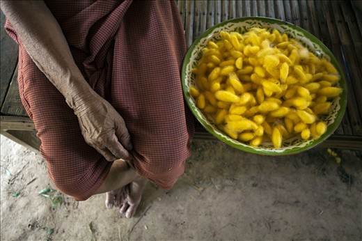 Nuan Jaohmaoh, age 77, is sitting next to the cocoons she cultivated herself. The silk produced by the family in summer, once a source of pride and entertainment, is in the hands of the passing generation. Sadly and probably, they will die alongside.