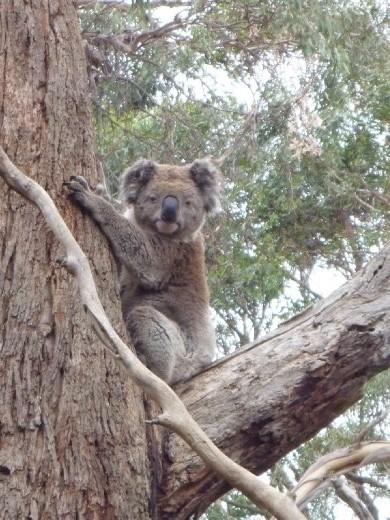 Koala, you're actually awake?