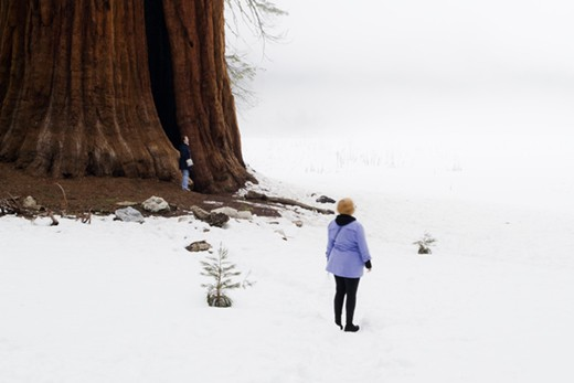 Thousands of visitors go everyday to the Sequoia National Park in California. Many of them try to escape from stress and routine, searching for an intimate connection with nature, as these women experience under one of the world's largest trees.