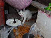 kitty enjoying Thai food: by gracepace, Views[207]