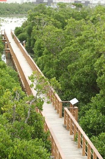 Boardwalk, Manko Waterbird and Wetland Center, Okinawa