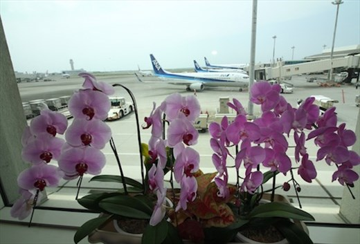 Orchids at the airport, Naha Okinawa