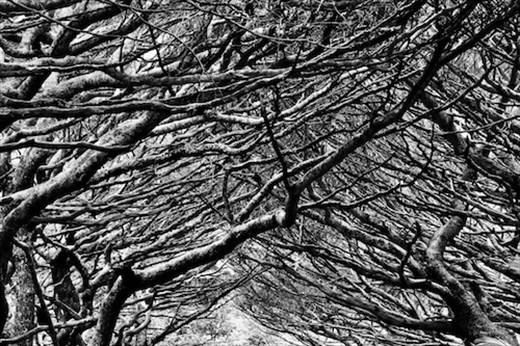 Canopy, Ile des Pins