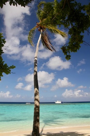 Palm and shadow, Conflict Island, PNG