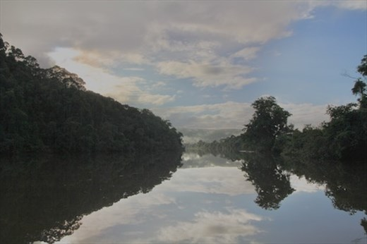 Daintree River early morning