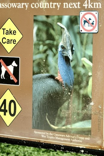 Cassowary Country