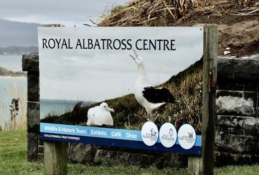 Royal Albatross Centre