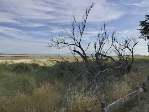 Ashley-Rakahuri Estuary
