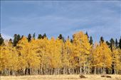 Golden Colorado Autumn: by graynomadsusa, Views[1]