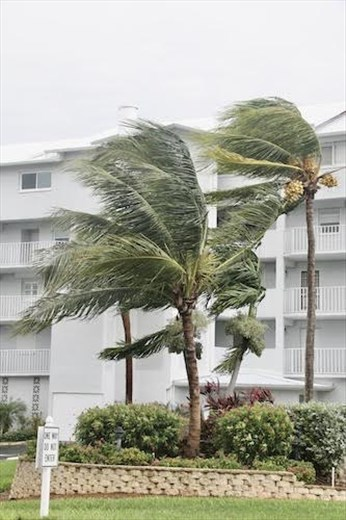 Wind in the Palms