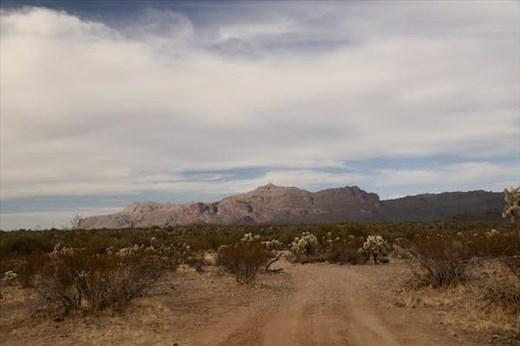 Sonoran Desert, Gold Canyon