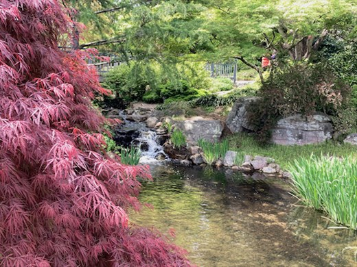 A bit of tranquility, Lewis Ginter Botanical Park