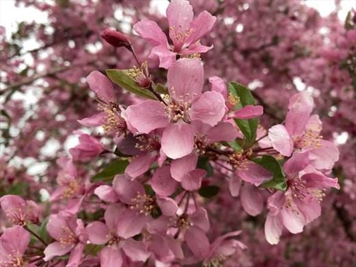 A Cherry Welcome to Colorado