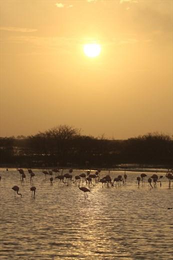 Sunrise on the wetlands, Progresso