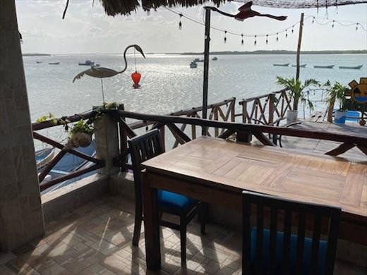 Watching for hummingbirds, Ria-Maya, Rio Largatos