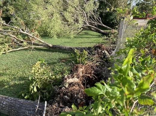 Aftermath of Hurricane Grace, Isla Cozumel