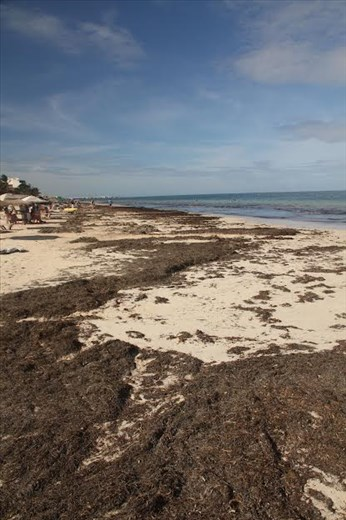 And it smells funky, too—Puerto Morelos beach
