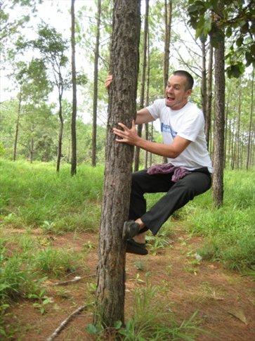 wild kirirom tree monkey