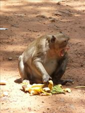 Cheeky monkey, this one won a monkey street battle for his 'nana: by gretch_costa, Views[124]