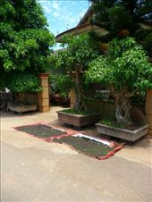 Pepper drying - outside every house in the DMZ area: by gretch_costa, Views[162]
