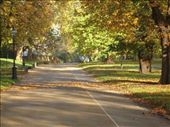 A footpath in Hyde Park: by gscottie, Views[306]