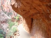 A rock overhang covering a stretch of the middle section of Angel's Landing trail : by gscottie, Views[222]