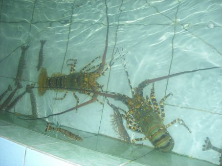 my lobster...soon be cooked..))