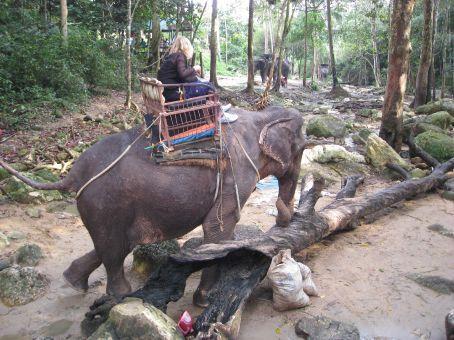 Elephant trekking on Samui