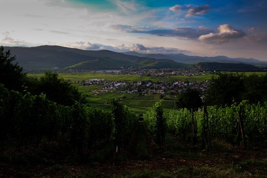 An evening over a vineyard in Alsace, this shot was taken two steps from the entrance of my tent.