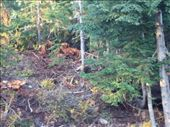 Spot the grizzly bear! (he's in here somewhere I promise!!): by h_s33, Views[137]