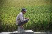 I was on a train to Semarang, Central Java, when suddenly it stopped in the middle of paddy fields. There at that moment, a farmer sits on a rock taking a break. His sickle is not a sign for violence, it's just a part of his life.: by hadiwina, Views[227]