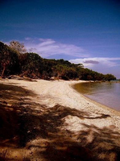 Mangroves at Nogas Island